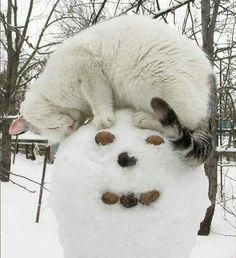 """<p><b></b><br />Endlich hat sie jemanden gefunden, der so ist wie sie: weiß wie Schnee. Da wird der neue tolle Freund gleich mal mit einer Runde kuscheln belohnt.(Bild: <a rel=""""nofollow"""" href=""""http://www.thisisphotobomb.com"""">www.thisisphotobomb.com</a>)</p>"""