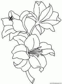 dibujar y pintar orquideas , Buscar con Google
