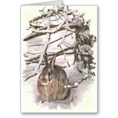 Snow Bunny Christmas Greeting Card