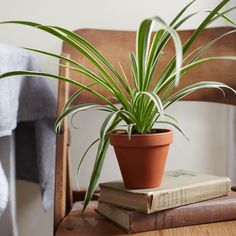 7 Houseplants That Purify The Air (And Are Nearly Impossible To Kill)