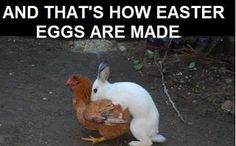 O_O in case you doubted that Easter is rooted in the pagan celebration of fertility