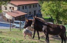 GUIPÚZCOA, ESKORIATZA. Casa rural Gorosarri. Caserío del siglo XVII, rehabilitado, con 6 apartamentos, se alquilan completos o por habitaciones (uno de ellos es accesible para personas con movilidad reducida). Todos disponen de salón, cocina y baño. En el exterior un jardín ideal para niños con piscina, fútbol, baloncesto, cabaña en el árbol y animales de granja.  Ubicado en el centro de Euskadi, desde donde podrás conocer tanto las capitales vascas, como sus parques naturales y su costa.