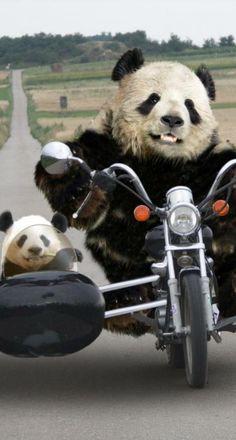 1000 images about pandas on pinterest animal t shirt baby pandas