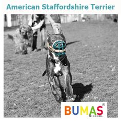 Buy the best custom-made dog muzzle from BUMAS. A custom muzzle is the best muzzle for your canine or beloved pet. These colourful and comfortable best fit muzzles are made from BioThane - original BUMAS are animal welfare certificated. Every Dog Breed, Dog Muzzle, Dog Breeds, Terrier, Freedom, Pets, Animals, Color, Liberty