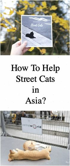 How to help street cats in Asia? It's easy to help stray pets in Asia. Click the image to read more about the stray cats and dogs in Asian countries such as Thailand and Japan and how to help them: http://www.traveling-cats.com/2018/01/cats-from-bangkok-thailand.html