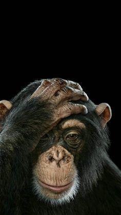 Monkey wallpaper by mirapav - 62 - Free on ZEDGE™ Monkey Art, Cute Monkey, Primates, Funny Monkey Pictures, Animals And Pets, Baby Animals, Strange Animals, Exotic Animals, Exotic Pets
