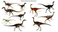 Carnivore Early Carnivorous Dinosaurs