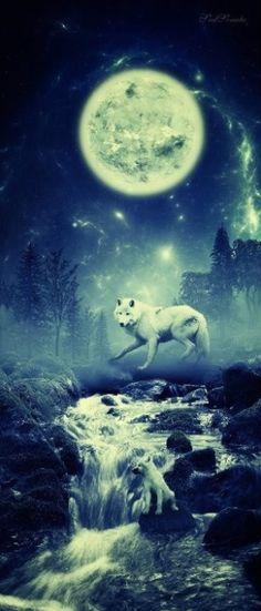 Wolf bei Nacht im Monschein.......