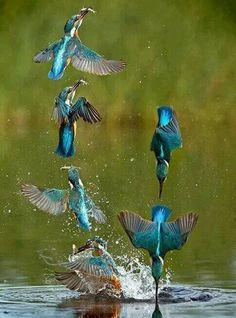 Beautiful and Great Hunter Kingfisher