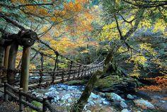 Vine Bridge-Iya Valley of Shikoku, Japan.