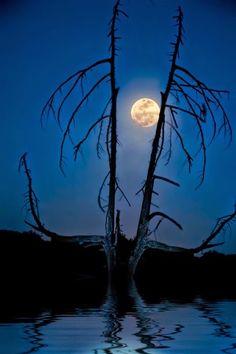 Ξέρω πως απ' τις λέξεις όλες μόνο μία/ το φέρνει κατευθείαν στο νου ή το καθορίζει/ Το μυστικό για μένα, είναι να την πεις/ με ταπεινότητα. Η λέξη είναι φεγγάρι... Έλα να γονατίσουμε μαζί και να προσευχηθούμε(Οδ.Ελύτης)