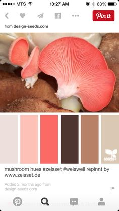 Coral brown colour pallet