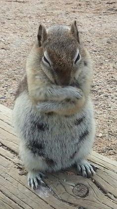 Skedaddle! It's MY nut!