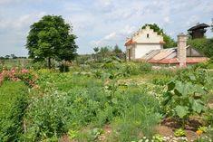 Jahody s česnekem (Aubrieta. Vineyard, Plants, Outdoor, Outdoors, Flora, Plant, Outdoor Games, Outdoor Living, Planting