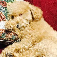 LIFEがお昼寝してた時に撮った😊 めっちゃ可愛いな〜 大好きな愛犬や家族の1員や😘😍 #life #大切な #愛犬 #大好き