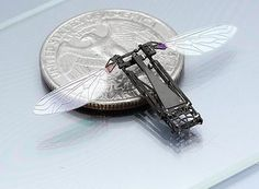 """Rise Of The Insect Drones 1-29-14  """"Nature spent millions of years perfecting flapping-wing flight. Now engineers can reproduce it with machines."""" Engineers will NEVER be able to come close to replicating a bee. A bee, or any pollinator, is more than a collection of wires and sensors. There is an intelligence there only gained thru millions of years trial and error that an invention in a lab has no way of matching."""