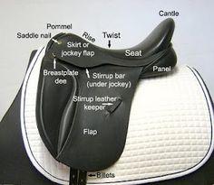Saddle terminology