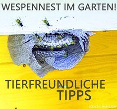 Was tun bei einem Wespennest im Garten? Tierfreundliche Tipps!