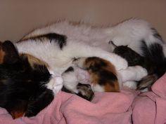 Müsli und ihre Kinder - die Habl Katzen