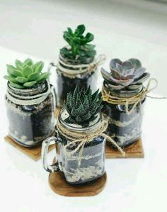 DIY succulent terrarium project at home. Learn how to do it on my website DIY succulent terrarium project at home. Learn how to do it on my website Terrariums, Mason Jar Terrarium, Mason Jar Mugs, Pot Mason Diy, Succulent Terrarium, Mason Jar Crafts, Cacti And Succulents, Planting Succulents, Planting Flowers