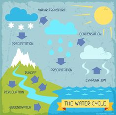 Interactive water cycle worksheet to teach kids about the main parts of the water cycle process, complete with interactive diagrams and activities. Science Notes, Science Notebooks, Science Lessons, Science Projects, High School Science, Elementary Science, Science Classroom, Water Cycle Process, Le Cycle De Leau
