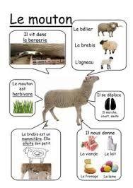 mouton activité pédagogique - Recherche Google