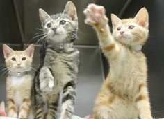 'Fairy tale' trio, FIV+,  are running out of time at high-kill upstate shelter