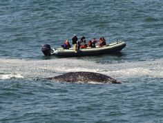 Spring Whale Watching Week is coming up -- here are six spectacular spots to see the migrating gray whales in Oregon.