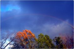 Rainbow @ Odell Weeks Aiken, SC Taken summer 2012 by Tracey Walling