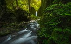 Download wallpapers Mossy Grotto Falls, waterfall, green forest, fern, mountain river, rock, Oregon, USA