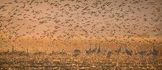 Birds in Paradise by Lara Koo - Photo 193710591 / 500px