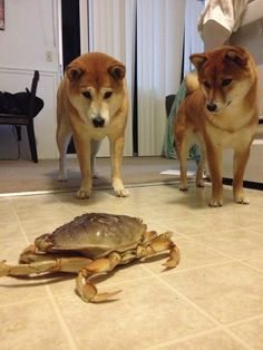 catbountry:    YOU HAVE ENCOUNTERED A CRABE  OPTIONS:  BATTLE CRAB  TAUNT CRAB  HAVE SLEEPOVER WITH CRAB