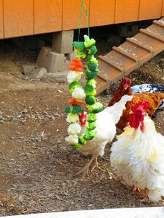 Eight healthy homemade treats for your chickens | The Owner-Builder Network