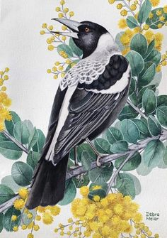 Magpie perched on Wattle, Native Bird Print, Australian Bird Watercolour, Wattle Watercolour Australian Painting, Australian Birds, Bird Pencil Drawing, Black Bird Tattoo, Australia Animals, My Art Studio, Watercolor Bird, Linocut Prints, Silk Painting