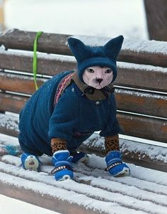 Very interesting post: TOP 35 Cats and Kittens Pictures. Also dompiсt.сom lot of interesting things on Funny Animals, Funny Cat.