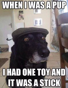 Funny Dog Photo: When I was a pup. - 4 The Love of Animals