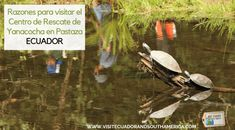 Ecuador, Galapagos Islands, Just Dream, Quito, Plan Your Trip, Lonely Planet, South America, Habitats, Trip Advisor