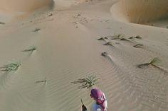 L'oasis de Liwa par Google Street View