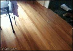 Cat Bowling: Strike!