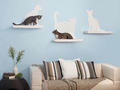 Modern cat shelves to create a cat walk along your wall. Chic metal and wood cat shelves that are sturdy and accommodate multiple cats. Crazy Cat Lady, Crazy Cats, Cat Habitat, Cat Wall Shelves, Cloud Shelves, Cat Climbing, Cat Room, Cat Silhouette, Pet Furniture