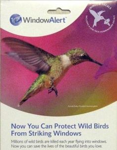 Natural Gardener December Todo List Backyard Pinterest - Window alert hummingbird decals amazon