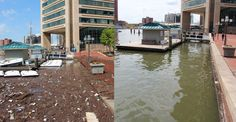 ByJohn Vibes attrueactivist.com  In just under a year, a water wheel that was installed in Baltimore's Inner Harbor has extracted over 160 tons of trash from the polluted harbor. Included in the garbage was 97,000 bottles, 80,000 potato chip bags and over 4 million …