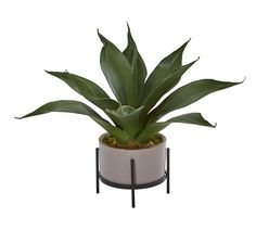 Adding the look of nature with carefree convenience to your home or office, the Agave in Stucco Textured Planter and Stand from Nearly Natural never needs watering or pruning. This striking, spiky-leafed design accents a table or desk. Artificial Succulents, Faux Succulents, Faux Plants, Succulent Pots, Planting Succulents, Artificial Flowers, Silk Plants, Growing Succulents, Indoor Plants