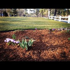 Signs of Springtime on Cape Cod.