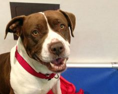 A perfect dog, Bonnie (Photos) -- Waiting for her forever home...