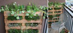 Pallet garden for small courtyard/balcony