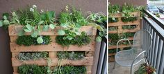 Cool pallet gardens.  I have lots of pallets that I could use