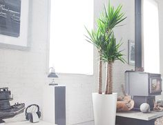 What makes these the 10 best indoor and office plants? Simple answer: they're beautiful and won't easily die.