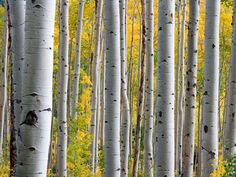 Is birch water the next big trend in beauty?