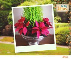 Recebemos uma dica de decoração natalina enviada pelo Juliano José.  Ele produziu um arranjo com Tuia Holandesa e Bico de Papagaio. Nós amamos, e você?